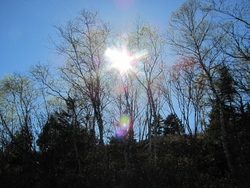 Sun in the trees