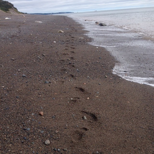Saturday stroll along the coast. #ysj #sjnb #bayoffundy #atlanticocean