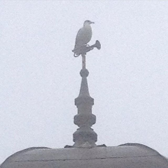 """The Saint John """"No Cornets are going to be played in the morning on my watch"""" Gull #livelifeuptown"""