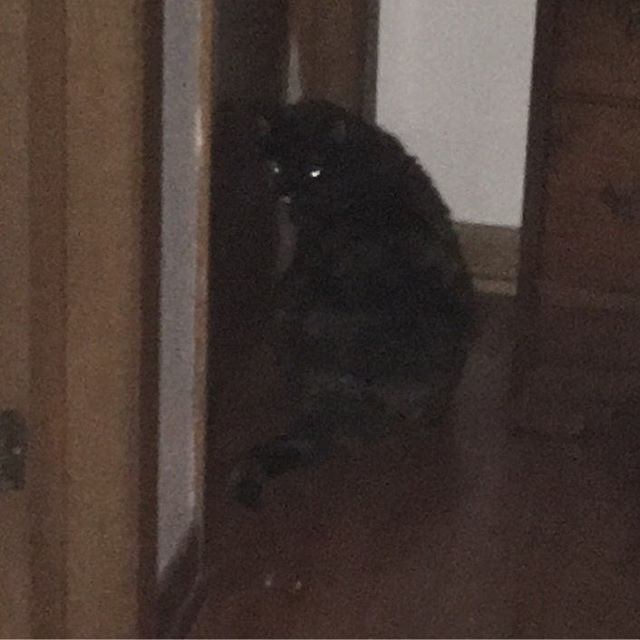 Poor kitty is locked out of the room and lonely for the long dark night. #catsofinstagram #poorkitty
